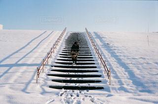 去年の冬の写真・画像素材[1691264]