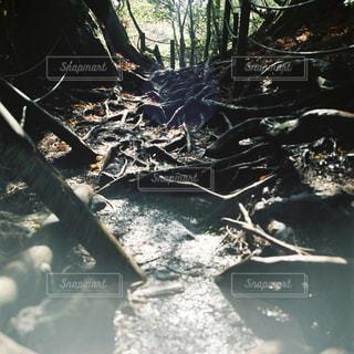 木々の写真・画像素材[2227365]