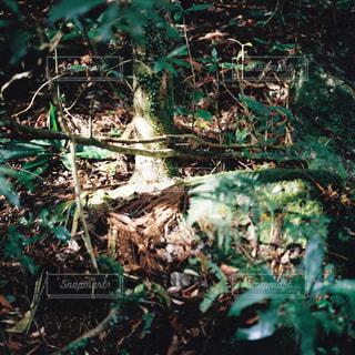 森の中の木の写真・画像素材[3143703]