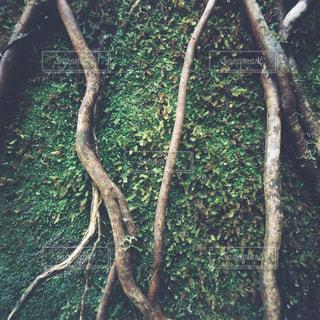 聖なる滝州立公園を背景にした森の木の写真・画像素材[3143720]