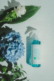 花,屋内,草木