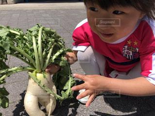 試合前に野菜収穫体験♪の写真・画像素材[1164037]