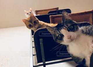 ノート パソコンのキーボードの上に横たわる猫の写真・画像素材[1280943]