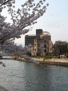 桜と原爆ドームの写真・画像素材[1157431]