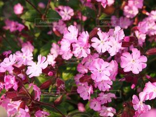 風景,花,屋外,ピンク,一眼レフ,ピンクだらけ