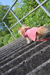 犬,自然,風景,チワワ,屋外,太陽,階段,綺麗,道,未来,希望