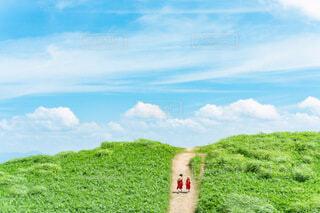 緑の畑のクローズアップの写真・画像素材[3799816]