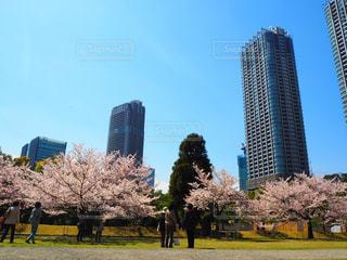 都市公園の背の高い建物の写真・画像素材[1156406]