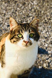 猫,動物,見つめる,旅先,ネコ