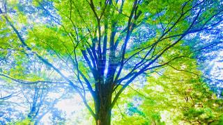 木の花の花瓶の写真・画像素材[1159063]