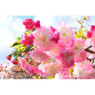 近くの花のアップの写真・画像素材[1156463]