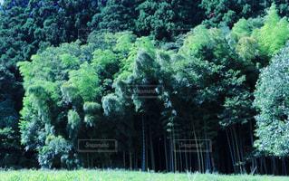 涼しげな竹林の写真・画像素材[1159432]