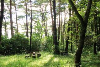 森の中での休憩の写真・画像素材[1159445]