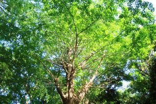 初夏の木漏れ日 - No.1159453