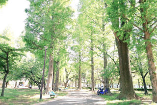 公園の大きな木々の写真・画像素材[1159482]