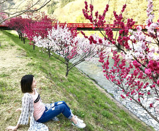 花桃の里の写真・画像素材[1254961]