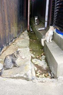 佐久島の猫たちの写真・画像素材[1265002]