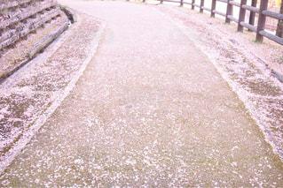 桜,散歩,花びら,道,4月,桜の花びら