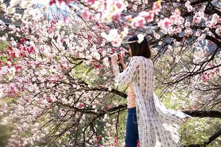 ピンク,撮影,お花見,花桃,阿智村,花桃の里