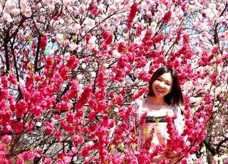 女性,花,春,屋外,ピンク,樹木,お花見,人物,人,長野県,花桃,草木,阿智村,花桃の里