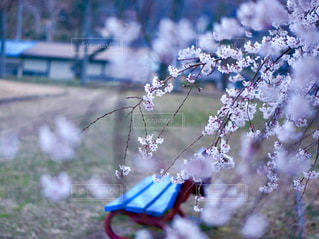 桜とベンチの写真・画像素材[2023920]