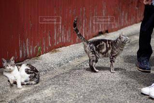 佐久島のねこちゃんの写真・画像素材[2095107]