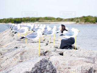 自然,海,空,カモメ,愛知県,佐久島,かもめ,カモメの駐車場,かもめの駐車場