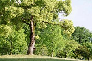 木の写真・画像素材[3209805]
