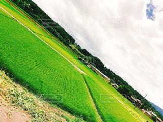 大規模なグリーン フィールドの写真・画像素材[1157800]