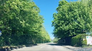 道の端に木の写真・画像素材[1170854]