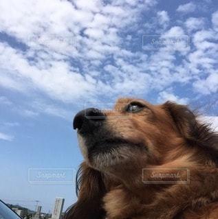 犬の写真・画像素材[37838]