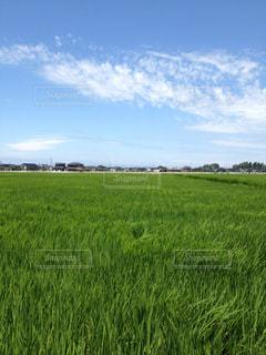 近くに緑豊かな緑のフィールドのの写真・画像素材[1168501]