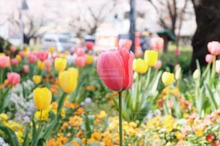 花の写真・画像素材[2009815]
