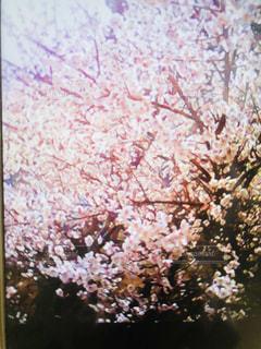 近くの木のアップの写真・画像素材[1439706]