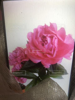 テーブルの上のピンクの花で一杯の花瓶の写真・画像素材[1440076]
