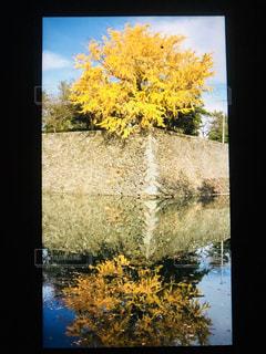 黄色,思い出,秋空,晩秋,澄んだ空,水面に,写るいちよう