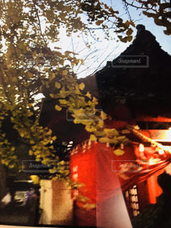 晩秋,秋祭り,薄明かり,深まる秋,色づくいちよう
