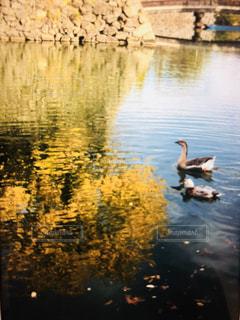 渡り鳥,お堀,晩秋,秋の空