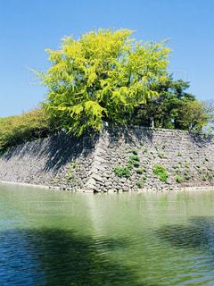 背景の木と水体の写真・画像素材[1510105]