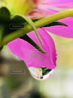 近くの花のアップの写真・画像素材[1511317]
