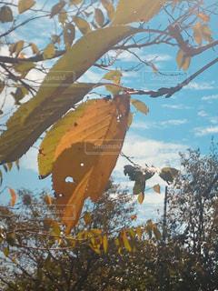 秋の空,鱗雲,台風一過,桜の落葉,色づく木々,秋色になる町