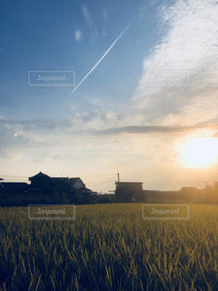 稲,飛行機雲,秋晴れ,秋の空,秋風,夕ぐれ,刈り入れまじかの田んぼ