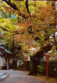 塩屋八幡の秋の写真・画像素材[1601436]