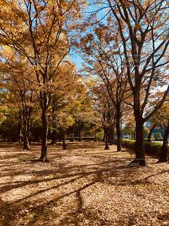 色づく並木林の写真・画像素材[1611706]