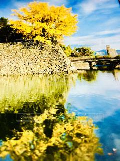 晩秋の空の下の写真・画像素材[1629080]