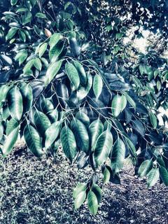 近くの緑の植物をの写真・画像素材[1175820]