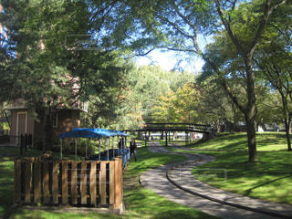 公園の新緑の写真・画像素材[1159720]
