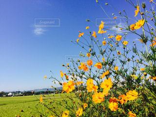 道端の花の写真・画像素材[1162964]