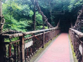山の中のつり橋の写真・画像素材[1163049]