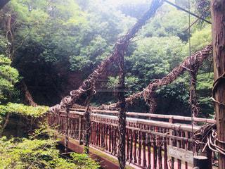 猿のかずら橋の写真・画像素材[1163056]